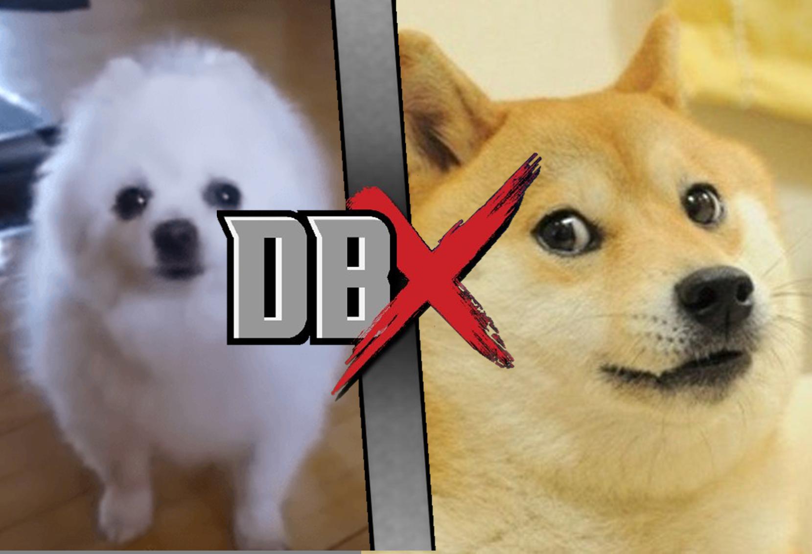 doge vs gabe the dog dbx fanon wikia fandom powered by wikia