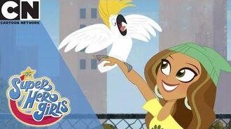 DC Super Hero Girls Pet Adoption Cartoon Network UK 🇬🇧