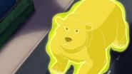 Bear projection
