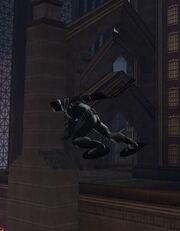 Black Harrier Skimming
