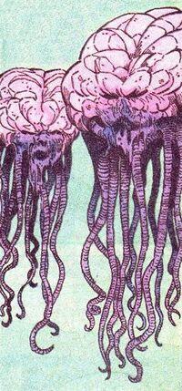 Giant Jellyfish 01