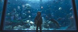 Arthur kid at the aquarium