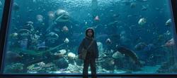 Arthur rodeado de peces