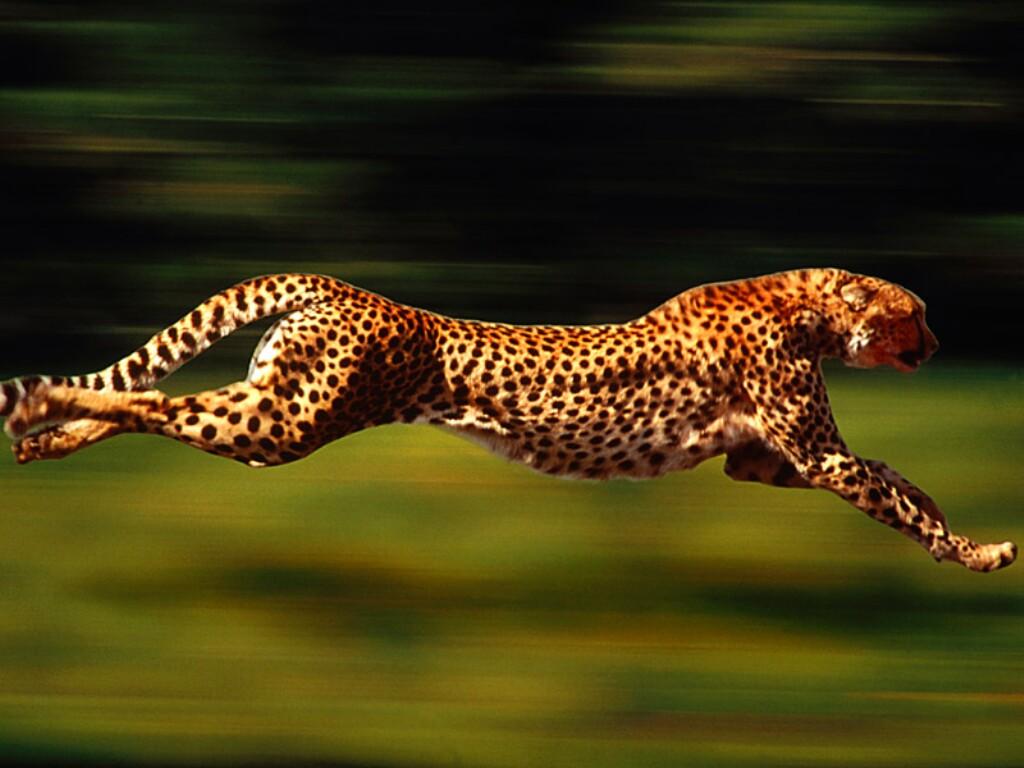 Conheça o animal mais lento da Natureza