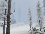 Paleto Forest Schnee