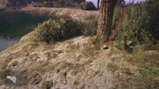 Peyote Plants GTAVe 05 Mt Gordo View