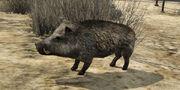 WildschweineV