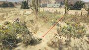 Peyote Plants GTAVe 12 Desert Oilfield View