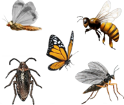 Insekten, GTA V