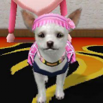 Babby The Chihuahua's avatar