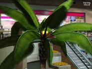 Dead rising entrance plaza grapefruit palm tree