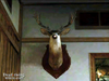 Dead rising pp huntin shack (2)