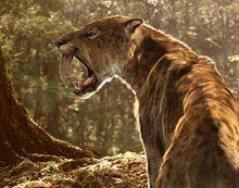 Evi smilodon large