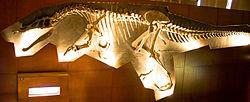 250px-Baryonyx NHM