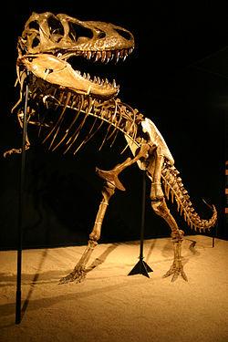 250px-Tarbosaurus mount