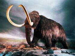 Woolly mammoth-1024x768