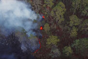 Rainforest-fire-frame