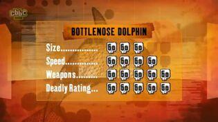 S1 DR bottlenose dolphin