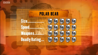 S1 DR polar bear