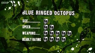 S3 DR blue ringed octopus