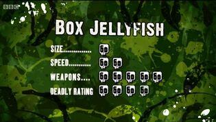 S3 DR box jellyfish