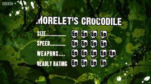 S3 DR morelets crocodile