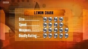 S1 DR lemon shark
