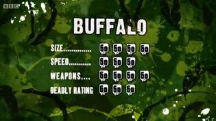 S3 DR Buffalo