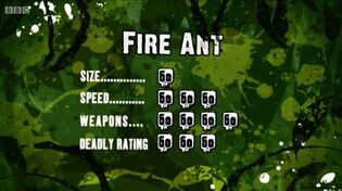 S3 DR fire ant