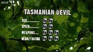S3 DR tasmanian devil