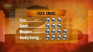 S1 DR tiger snake