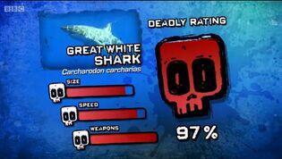 Ptp dr great white shark
