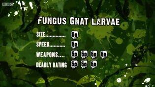 S3 DR fungus gnat larvae