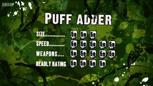 S3 DR puff adder