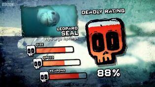 PTP DR leopaed seal