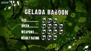 S3 DR gelada baboon