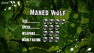 S3 DR maned wolf