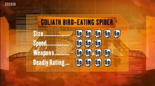 S1 DR bird spider