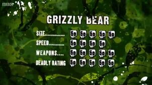 S3 DR grizzly bear