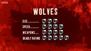 S2 DR wolf