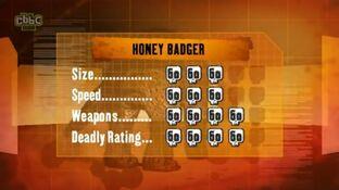 S1 DR honey badger