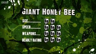 S3 DR giant honey bee
