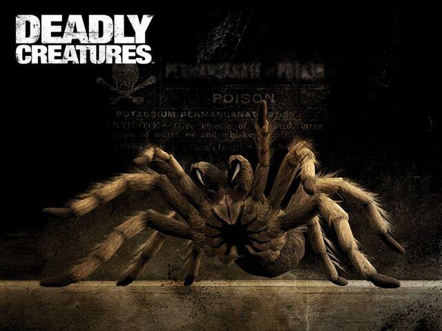 File:Deadly creatures tarantula-1152x864.jpg