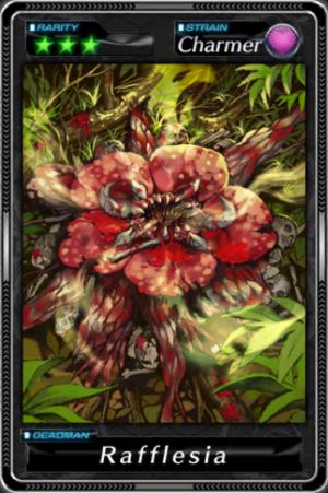 -000019--Rafflesia-