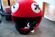 Deadmau5-meowingtons-trademark-1483117069-compressed