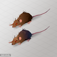 Rats research