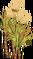 Sugarcane 3