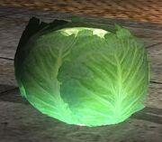 DOA5LR Cabbage