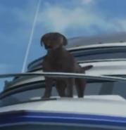 DOA3 Dog