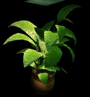 Dead rising Large Potted Plant 88